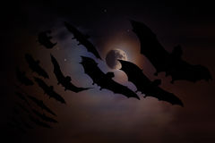 Bats Flying in the Moonlight Stock Photo
