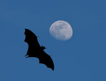 Bats flying at night Royalty Free Stock Photo