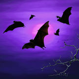 Bats flying at night Royalty Free Stock Photos
