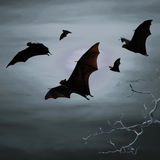 Bats flying at night Stock Photography