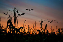 Bats flying over corn Stock Photo