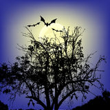 Bats flying over tree Royalty Free Stock Photo