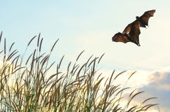 Bats flying in spring season sky for background usage, Halloween Stock Photography