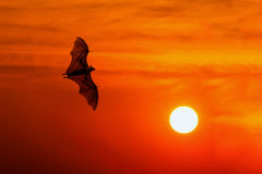 Bats flying at sunset Royalty Free Stock Photos