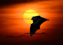 Bats flying at sunset Stock Image