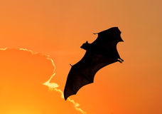 Bats flying at sunset Royalty Free Stock Images