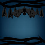 Bats hanging Royalty Free Stock Photo