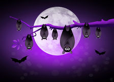 Bats hanging Stock Images