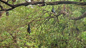 Bats hanging on a tree Royalty Free Stock Photography