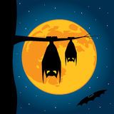 Bats hanging on a tree Stock Images
