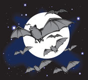 Bats Royalty Free Stock Photos