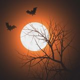 Bats at night time Royalty Free Stock Photography