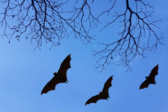 Bats silhouettes and beautiful branch for background usage Stock Images