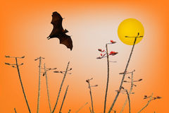 Bats silhouettes and beautiful branch for background usage Royalty Free Stock Images