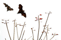Bats silhouettes and beautiful branch for background usage Stock Photo