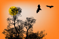 Bats silhouettes and beautiful branch for background usage in su Royalty Free Stock Images
