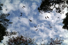 Bats In The Sky. Bats flying in the sky between trees Stock Images