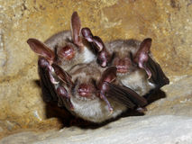 Bats sleeping in a cave Stock Photos