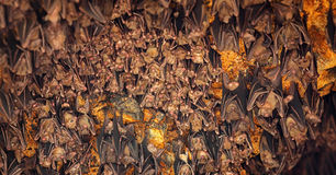 Bats Sleeping on Ceiling at Goa Lawah Temple in Bali Royalty Free Stock Photos