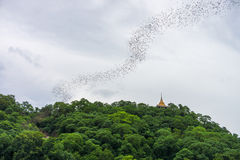 Bats stream out of the cave on the hill at Wat Khao Chong Phran Stock Photography