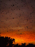 Bats at sunrise Stock Photo