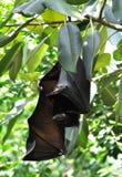 Bats on tree Royalty Free Stock Photos