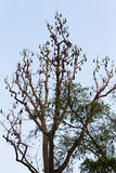 Bats on the tree Stock Photography