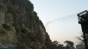 Battambang, Камбоджа - около февраль 2018: Летучие мыши летая из их пещеры на раннем вечере сток-видео