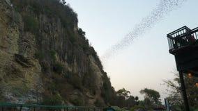 Battambang, Камбоджа - около февраль 2018: Летучие мыши летая из их пещеры на раннем вечере видеоматериал