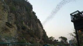 Battambang, Камбоджа - около февраль 2018: Летучие мыши летая из их пещеры на раннем вечере акции видеоматериалы