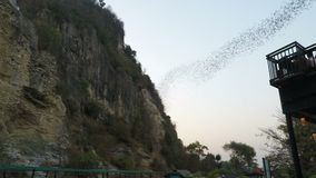 Battambang, Cambodia - Circa February 2018: Bats flying out of their cave at early afternoon. Battambang, Cambodia - Circa February 2018: Bats flying out of stock video