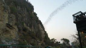 Battambang, Camboya - circa febrero de 2018: Palos que vuelan de su cueva en la primera hora de la tarde almacen de video