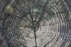 Batte i piedi la struttura dell'albero Immagini Stock