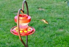 Battements de colibri Images stock