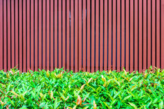 Batten wooden fence with plant hedge. The small garden for exterior decoration royalty free stock images
