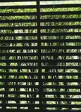 Battens δικτυωτού πλέγματος που καλύπτονται από τη βλάστηση στοκ εικόνες