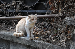 Battered dirty homeless cat sitting on the street Royalty Free Stock Images
