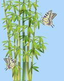 Batterflies  and bamboo Stock Photos