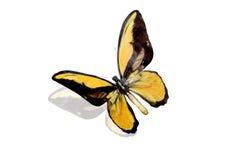 batterfly Στοκ εικόνες με δικαίωμα ελεύθερης χρήσης