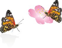 Batterfly Stock Photo