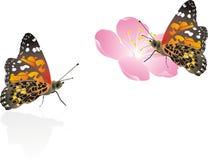 Batterfly Stock Foto
