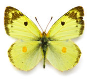 Batterfly fotos de stock royalty free