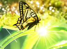 Batterfly. Butterfly in the sunny grass stock image