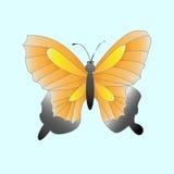 Batterfly Stock Photography