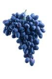 Batterie bleue de raisin photographie stock