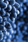 Batterie bleue de raisin photos stock