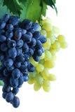 Batterie bleue et verte de raisin avec des lames sur la vigne photographie stock libre de droits
