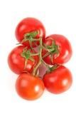 Batterie de tomates Image libre de droits