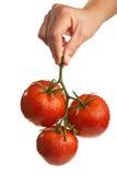 Batterie des tomates rouges dans une main d'isolement Photographie stock