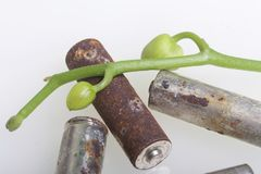 Batteries of corrosion. They lie on a white surface, covered with a branch of orchids with unrevealed buds. Environmental protecti. On, recycling of used royalty free stock photography